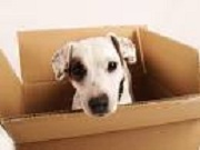 pet relocation tips